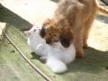 """Wie """"Hund und Katz"""""""