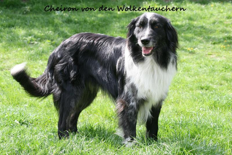 Cheiron-von-den-Wolkentauchern
