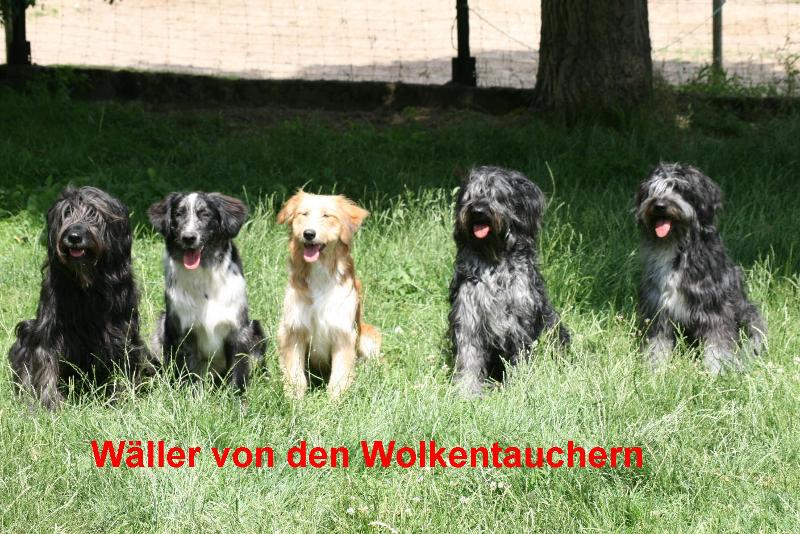 Unsere-Waeller-Waeller-von-en-Wolkentaucheren1