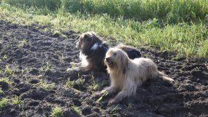 Hetty und Finn